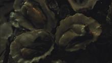 Hannibals Dishes S03E01 02