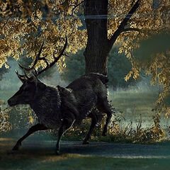 One of the first appearances of the Stag.