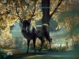 The Stag (TV)