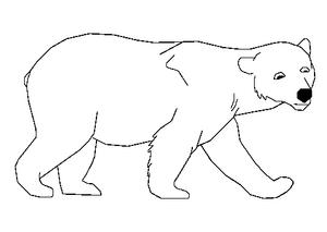 Sharon the Polar Bear