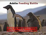 Adélie Feeding Battle (Alternate Endings)