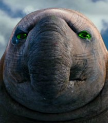 Rory the Elephant Seal