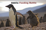 Adélie Feeding Battle Title