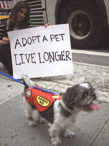 File:Adopt a Pet, Live Longer!.jpg