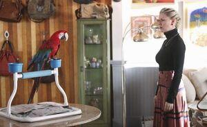 HAPPY-ENDINGS-Meat-the-Parrots-Season-2-Episode-11