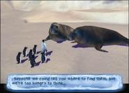 Land of the Elephant Seals - Elephant Seal 1 trying to explain