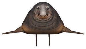 Robin Seal 1