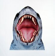 Leopard Seal mouth concept