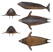 Robin Seal 2