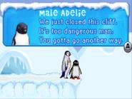 MaleAdelieSlidingCliffIsClosed