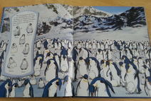 Happy Feet Look and Find - Emperor Penguins