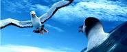 The Albatross (character)
