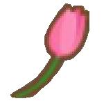 Tulip-0-0