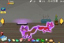 Rare purple blacklight foxes
