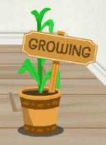 Growing Corn Plant