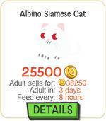 Albino Siamese Cat New