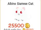 Albino Siamese Cat
