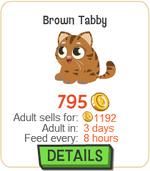Brown Tabby New