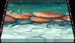 Magical Mushrooms Path