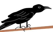 Big Picture - Raven