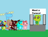 Meet the turaco
