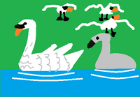 Big Picture - Swan and Cygnet