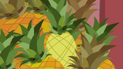 STV1E13.2 pineapple