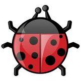 Ladybug2244