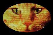 Cheshire Cat logo