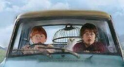 Flying to Hogwarts