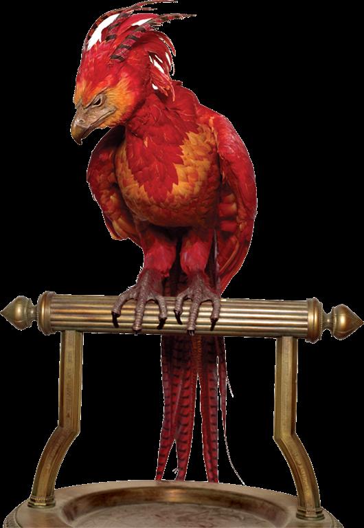 Image phoenixg harry potter wiki fandom powered by wikia phoenixg voltagebd Gallery