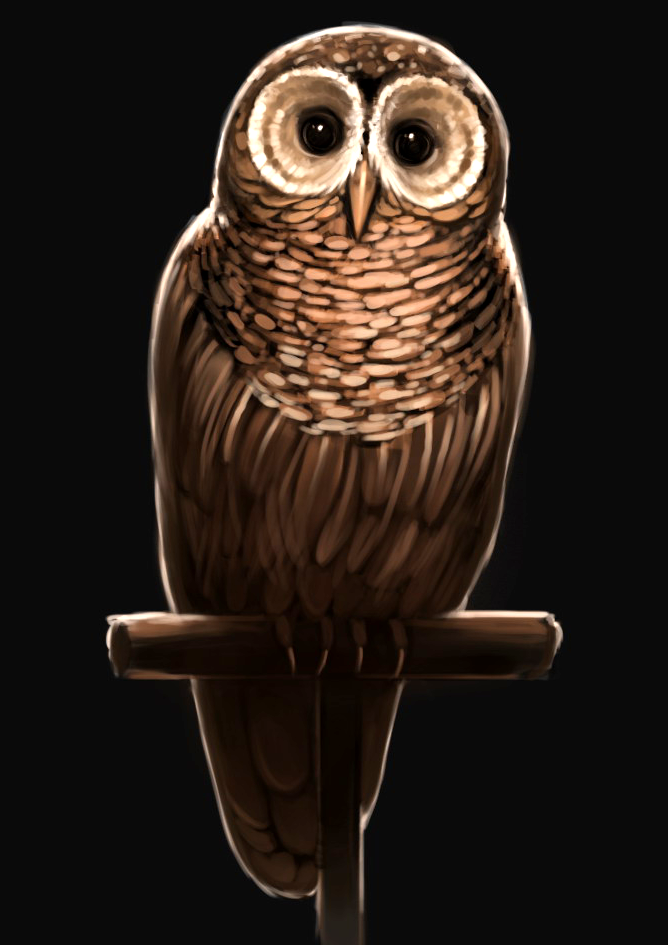 brown owl harry potter wiki fandom powered by wikia