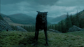 Padfoot.png