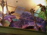 Морщерогий кизляк