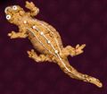 Ginger Newt.png