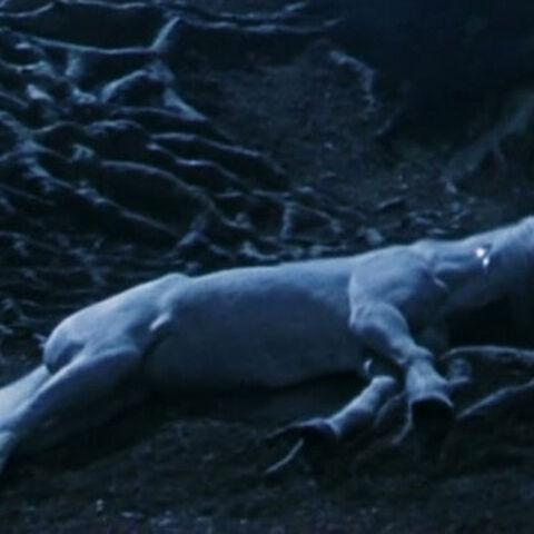 Убитый Квирреллом Единорог