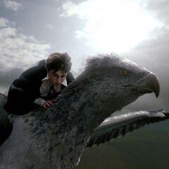 Первый полёт Гарри на Клювокрыле