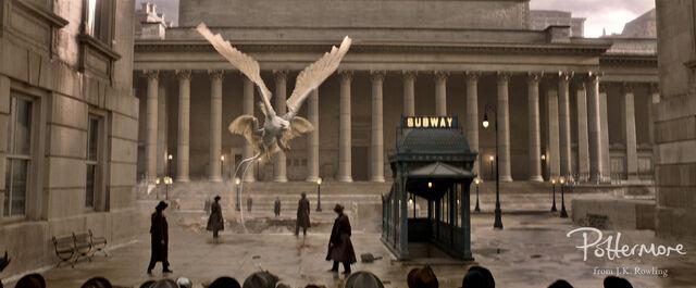 File:Thunderbird Fantastic Beasts CC Trailer WM.JPG