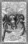 Akromantula - ilustracje Tomislava Tomicia
