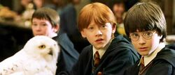 Hedwig, Seamus, Ron and Harry Potter (1991)