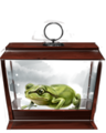 Western Green Toad.png