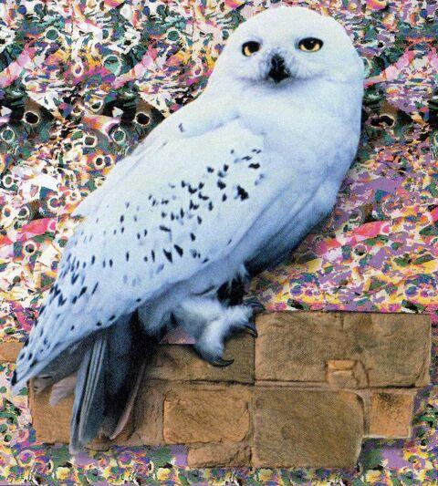 Файл:Hedwig.jpg