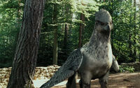 Buckbeak