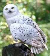 Hedwig WB F3 HedwigInTheForest Still 100615 Port