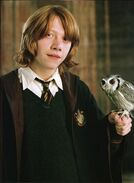 362px-Ron-and-his-owl