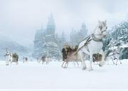 Hogwarts snow