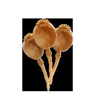 PM-Item PoppyHeads