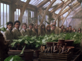 Sala de aula de Herbologia