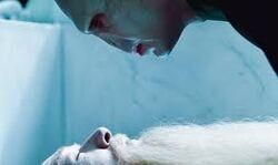 Voldemort rouba a Varinha das Varinhas