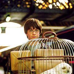 Гарри поражён расположением платформы